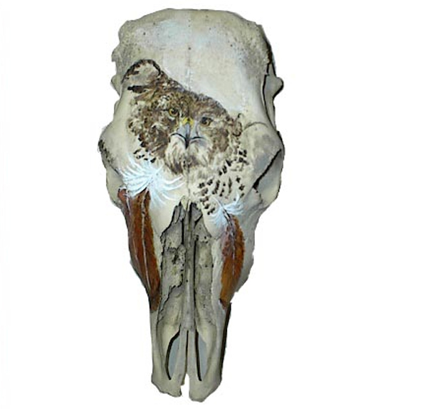 Redtail Hawk on Cattle Skull