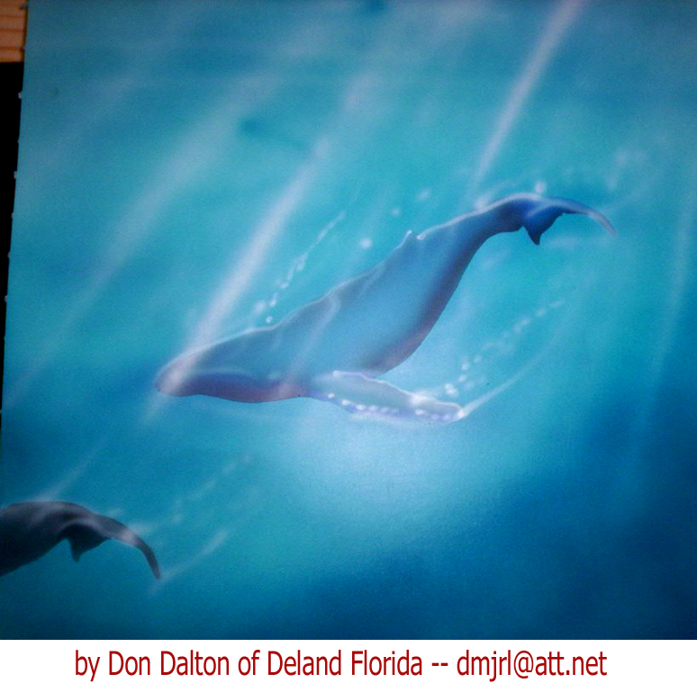 Whales airbrushed by Don Dalton